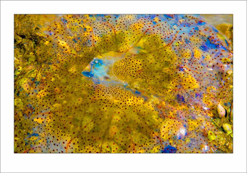 jellyfish_mg_0584-as-smart-object-1-60x42-border-email